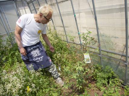 世田谷ベースで農作業?!パクチー、レモングラス、季節の野菜が育つ、所さんの菜園に潜入!