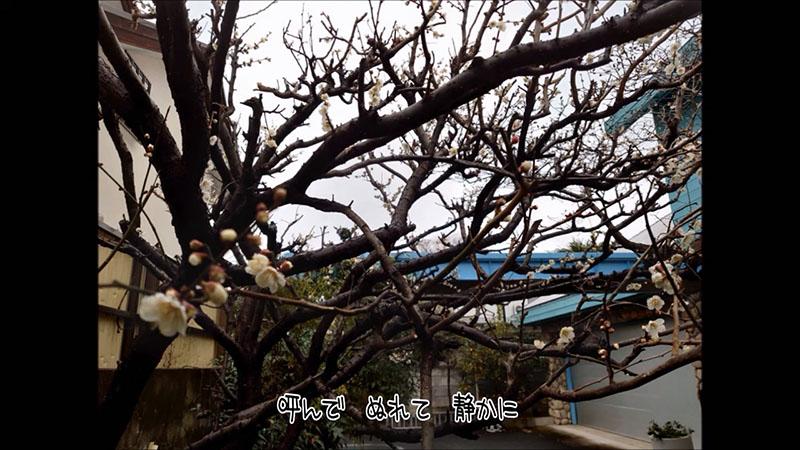 最近の唄284 2月16日の雨 / 所ジョージ