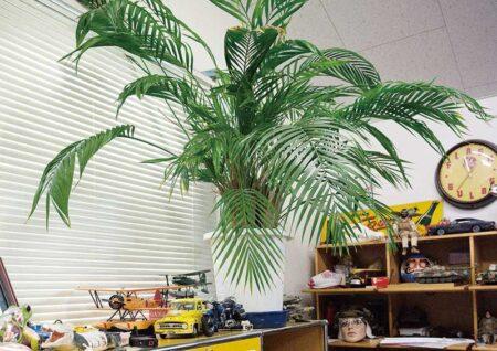 世田谷ベースのオススメ観葉植物 インテリアをグリーンで彩ろう